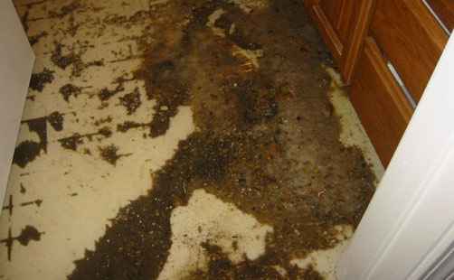 CARPET SEWAGE DAMAGE CLEANING SERVICE